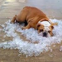 How To Stay Cool Without An Air Conditioner