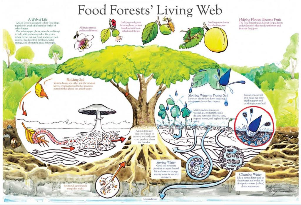 food-forest-living-web